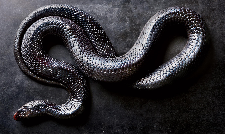 Картинки на телефон змей