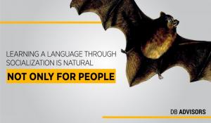 What determines the linguistic abilities of bats?